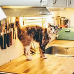 Inšpirácie a rady pre moderné kuchyne